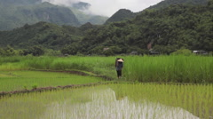 Vietnamese farmer man carrying harvest in rice fields of Sapa Mai Chau Vietnam Stock Footage