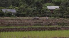 Vietnamese farmer ploughing a rice field  with a bull in Sapa Mai Chau Vietnam Stock Footage