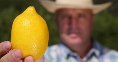Cultivator Recommend Fresh Yellow Exotic Citrus Fruit Ripe Yellow Juicy Lemon Stock Footage