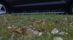 On the green lawn are the fallen leaves of trees. On the background of grass car Stock Footage