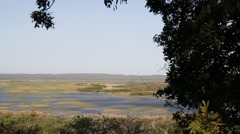 In south africa   pond lake  nature  reserve and bush Stock Footage
