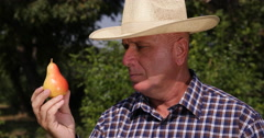 Fruit Producer Examine Carefully Close Up Pear Ecological Bio Orchard Production Stock Footage