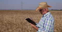 Serious Mature Farm Worker Write in his Agenda Production Management Wheat Field Stock Footage
