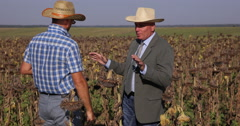 Farm Owner Partners Talk About Sunflower Agriculture Industry Business Problems Stock Footage
