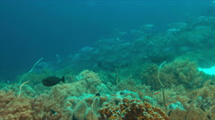 Coral reef with big sea fan and plenty fish 4k Stock Footage
