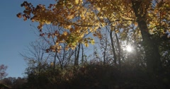 Autumn Yellow Tree with Blue Sky and Sun, Slider Motion Left Stock Footage