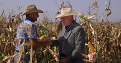 Agriculture Business Partners Negotiate Cornfield Production Market Sale Price Stock Footage