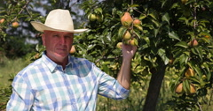 Proud and Satisfied Farmer Recommend Bio Pear Fruits from His Organic Orchard Stock Footage