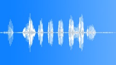 Birds Various Sandhill Crane Single Vocal Fight Calls Raspy Squawks Bright Shar Sound Effect