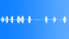 Birds Various Sandhill Crane Single Vocal Calls Throaty Squawks Bird Chirps Med Sound Effect