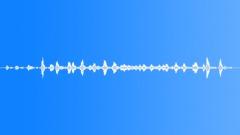 Birds Seagulls Seagulls Flock Medium Distant Sound Effect