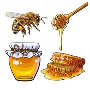 Jar of honey, bee, dipper and honeycomb on white background Stock Illustration
