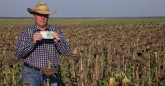 Farmer in Sunflower Field Showing Money Symbol of Agriculture Investment Concept Stock Footage