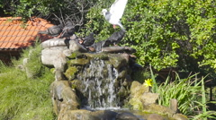 Birds pigeons splashing in the water on a hot dry day. Pure fresh water water Stock Footage