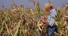 Agriculture Specialist Inspect Cornfield Take Clipboard Notes Examine Production Stock Footage