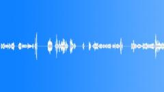 Voices Specific Male Female Hospital Medical Conversation Report Doctors Nurses Äänitehoste