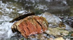 Stone in the stream of water Stock Footage