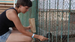 Girl Feeds the Animals on the Farm Stock Footage