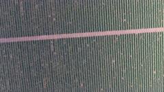 Aerial view on extensive vineyards, 4k Stock Footage