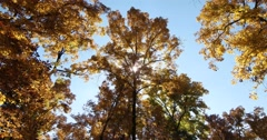 Autumn Trees Against Blue Sky with Sun and Light Breeze, static shot Stock Footage
