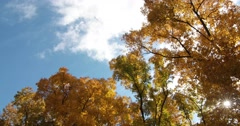 Autumn Trees with Sky, Clouds & Sun, static shot Stock Footage