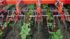 The mechanism cuts the weeds between the neat rows of sunflower. Top view Stock Footage