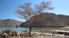 Lonely tree, sultanate of Oman, Musandam peninsula, Gulf of Oman Stock Footage