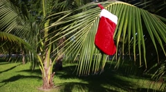 Christmas stocking hanging on coconut palm tree leaf Stock Footage