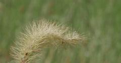 Seeds on Green Grass at Farm Macro Close Up 10bit, 4K Stock Footage