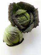 Savoy and white cabbage Stock Photos