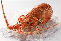 Spiny lobster on crushed ice Stock Photos