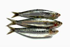 Three sardines, photographed with special effect Stock Photos