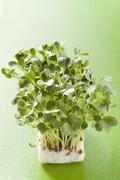 Daikon cress on green background Stock Photos