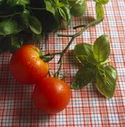 Stalk with two tomatoes; basil leaves Stock Photos
