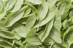 Fresh spinach leaves (full-frame) Stock Photos
