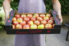 Man holding box of fresh apples in open air Stock Photos
