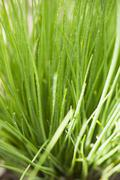 Fresh chives in the open air (detail) Stock Photos