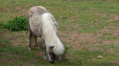 Grazing light brown pony Stock Footage