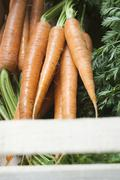 Fresh carrots in crate Stock Photos