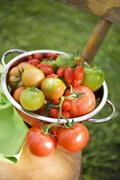Various types of tomatoes in colander on chair out of doors Stock Photos