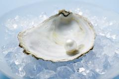 Pearl in oyster shell on crushed ice Stock Photos