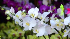 View of white orchid branch dangles in the wind Stock Footage