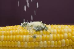 Sprinkling salt on corn on the cob with herb butter Stock Photos