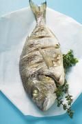 Whole fried sea bream on paper Stock Photos