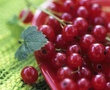 Redcurrants in a dish Stock Photos