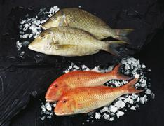 Two red snapper and two gilthead sea bream Stock Photos
