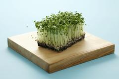 Broccoli sprouts Stock Photos