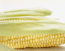 Corn on the cob with husks Stock Photos