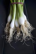 A bunch of spring onions Stock Photos