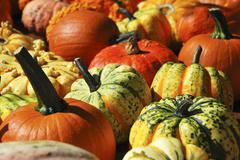 Various types of pumpkins (macro zoom) Stock Photos